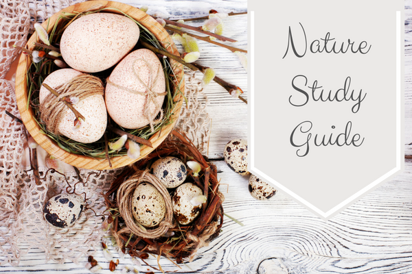 Nature Study Guide - This nature study guide has suggestions, resources and tips to get started with a Charlotte Mason homeschool with nature as the teacher. | www.thecharlottemasonway.com